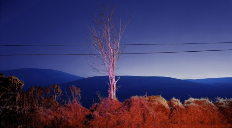 A country road. A tree. Evening. Somewhere between Tonygarrow and Cloon Wood, below Prince William's Seat, Glencree, Co. Wicklow, 2007, Courtesy the artist and Lisson Gallery, London, ©Gerard Byrne