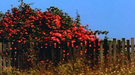 Film still from Bruce Ballie's All My Life, 1966