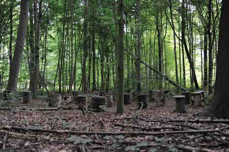 """Janet Cardiff and George Bures Miller, """"Forest (for a thousand years),"""" 2012, courtesy of Janet Cardiff and George Bures Miller, Galerie Barbara Weiss, Berlin; Luhring Augustine, New York; Galerie Koyanagi, Tokyo. Photo by Nils Klinger."""