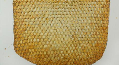 Kiel Johnson, Comb Sweet Comb, 2014