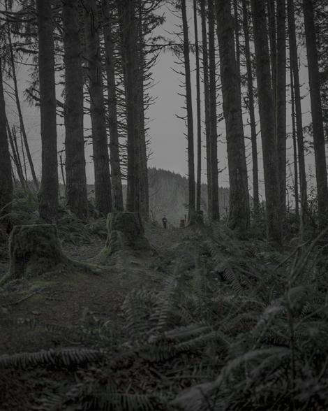 CBennett Darkwood5 Portland Photo Month