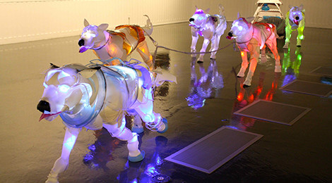"Cynthia Minet, Pack Dogs, 2013, part of the ""Unsustainable Creatures"" series, Image: Juan Rojas/USC Fisher Museum of Art."