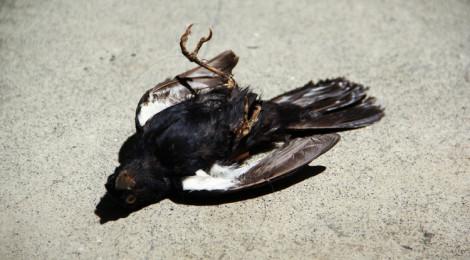 Adriana Salazar, Pájaro #2 (Bird #2), 2011