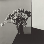 Mapplethorpe Tulips 1978 150x150 <ns>AWOL</ns>