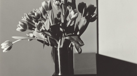 Robert Mapplethorpe, Tulips, 1978