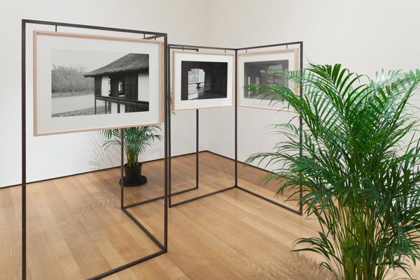 Yuki Kimura, KATSURA, 2012, Nine gelatin silver prints, frames, iron, and plants. Courtesy MoMA NY and Committee on Photography Fund.