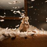 DougAitken migration owl 150x150 <ns>AWOL</ns>