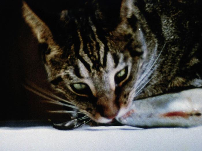 Wieland Catfood 1col 700x700 Classic Films by Joyce Wieland