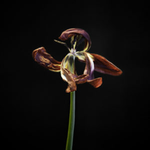 2 JohnHerrin Flower6 PDNBGallery low res 300x300 Events
